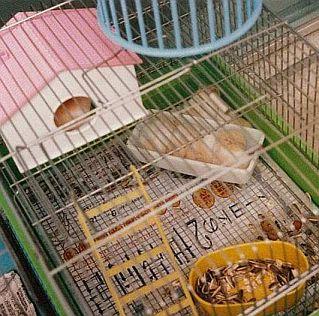4070cb573481 diaryアーカイブ: 猫の小耳
